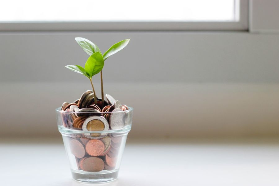 Plant growing in money jar